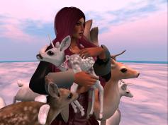 oh-deer2_001
