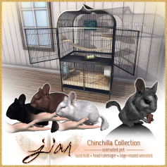 Jian Chinchillas_Luxe Box