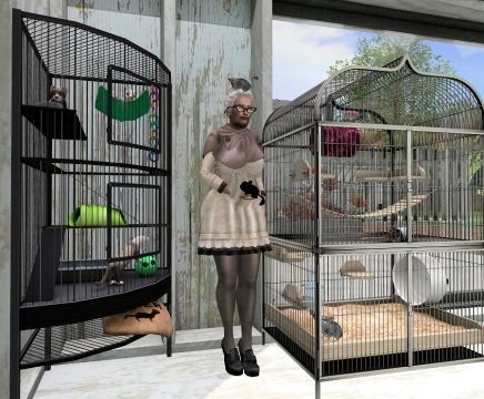 Chinchillas and Rodent Room